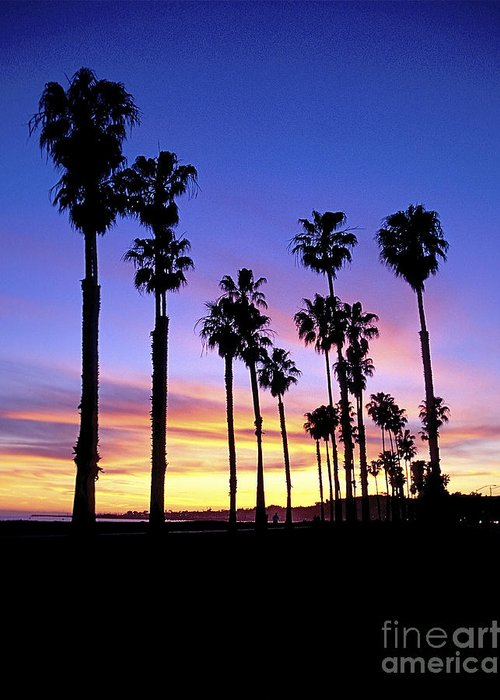 Carrillo Beach Palms Sunset Greeting Card featuring the photograph Carrillo Palms by Alexis Cottavoz