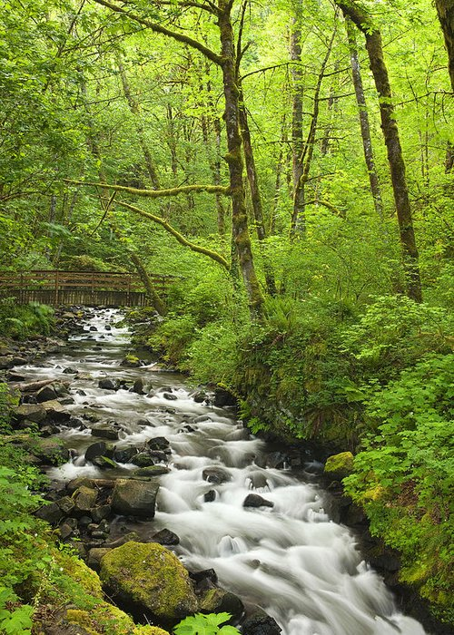 River Greeting Card featuring the photograph Cascading Stream In The Woods by Andrew Soundarajan