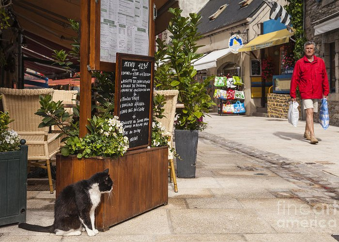 Brittany Greeting Card featuring the photograph Cat And Restaurant Concarneau Brittany France by Colin and Linda McKie