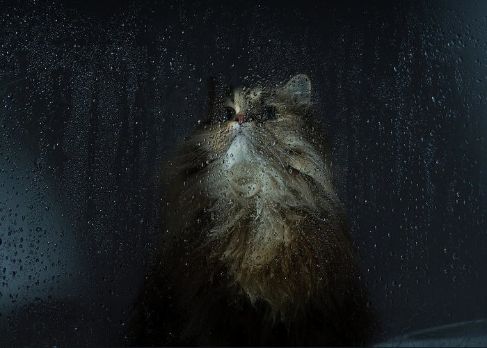 Pets Greeting Card featuring the photograph Cat By Rainy Window by Benjamin Torode