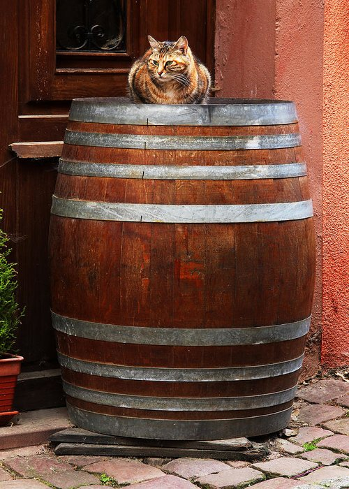 Cat Greeting Card featuring the photograph Cat Guarding A Wine Barrel In Alsace by Greg Matchick