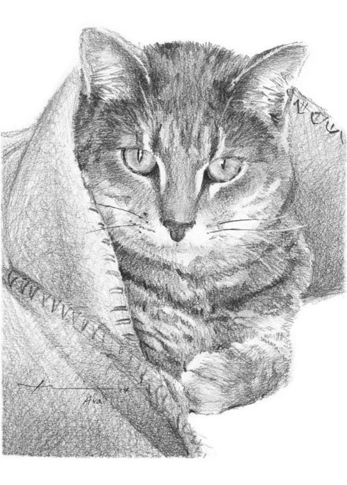 <a Href=http://miketheuer.com Target =_blank>www.miketheuer.com</a> Cat In A Blanket Pencil Portrait Greeting Card featuring the drawing Cat In A Blanket Pencil Portrait by Mike Theuer