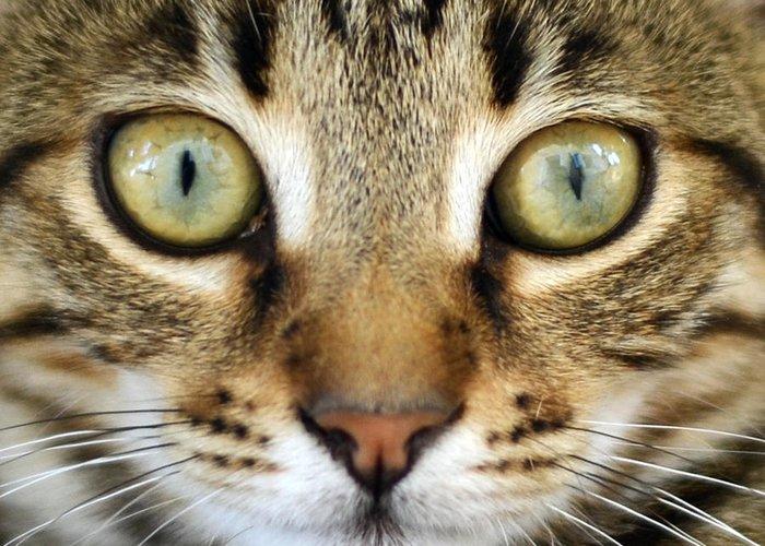 Cat Greeting Card featuring the photograph Cat Portrait Macro Shot by Aleksandar Mijatovic