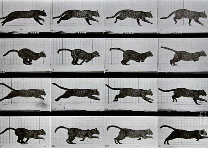 Muybridge Greeting Card featuring the photograph Cat Running by Eadweard Muybridge