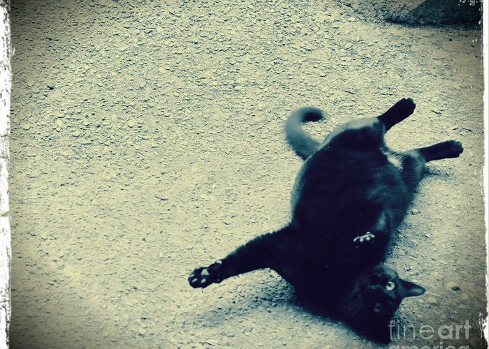 Black Greeting Card featuring the photograph Cat Yoga by C Lythgo
