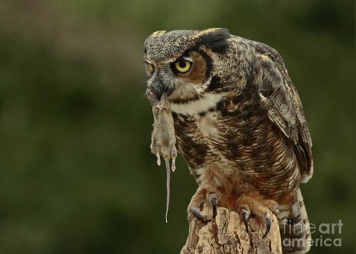 Catch Greeting Card featuring the photograph Catch Of The Day - Great Horned Owl by Inspired Nature Photography Fine Art Photography