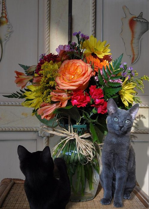 Cats Greeting Card featuring the photograph Cats 67 by Joyce StJames