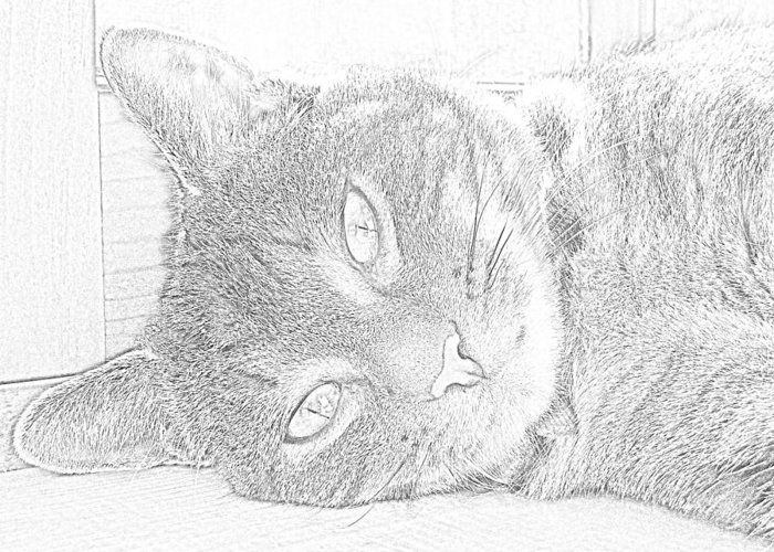 Animal Greeting Card featuring the photograph Cat's Eye by J D Owen