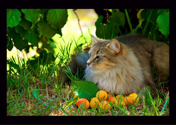 Cat At Rest Greeting Card featuring the photograph Cat's Mountain Summer by Susanne Still