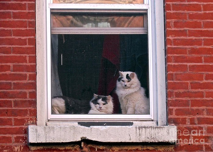 Cats Greeting Card featuring the photograph Cats On A Sill by Randi Shenkman