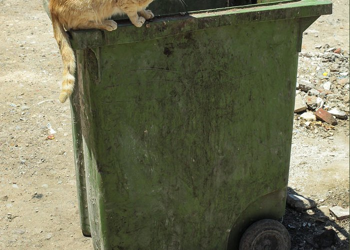 Cat Greeting Card featuring the photograph Cats On And In Garbage Container by Patricia Hofmeester