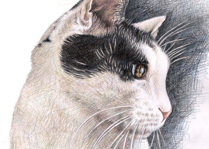 Cat Greeting Card featuring the drawing Cats View by Nicole Zeug