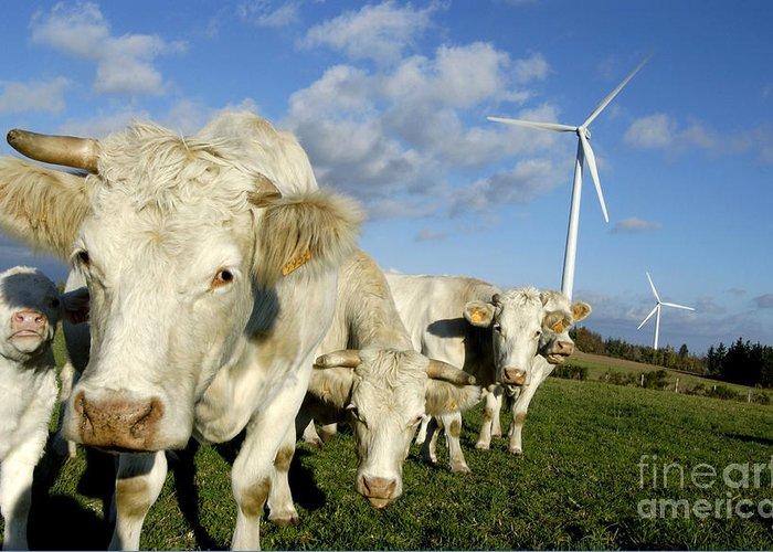 Air Greeting Card featuring the photograph Cattle by Bernard Jaubert