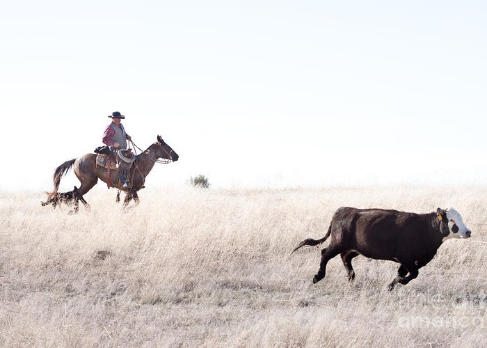 Cowboy Greeting Card featuring the photograph Cattle Drive by Cindy Singleton