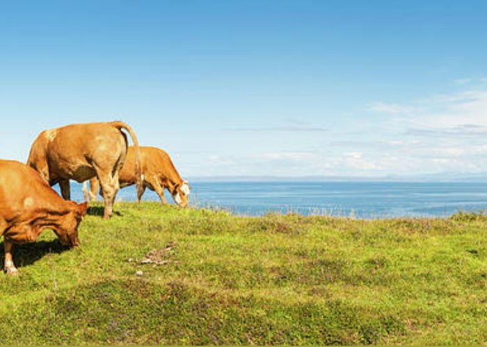 Water's Edge Greeting Card featuring the photograph Cattle Grazing In Picturesque Meadow by Fotovoyager