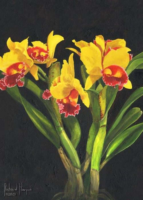 Flower Greeting Card featuring the painting Cattleya Orchid by Richard Harpum