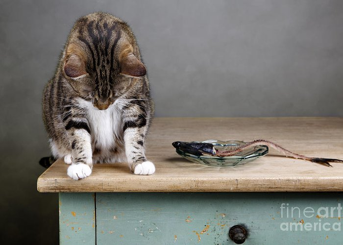 Cat Greeting Card featuring the photograph Caught In The Act by Nailia Schwarz