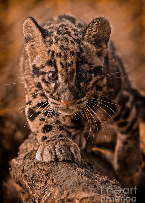 Adorable Greeting Card featuring the photograph Cautious Advance by Ashley Vincent