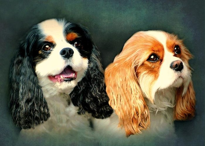 Dogs Greeting Card featuring the photograph Cavalier King Charles by Diana Angstadt