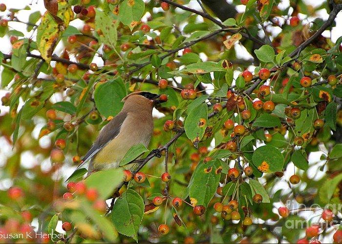 Bird Greeting Card featuring the photograph Cedar Waxwing by Susan Herber