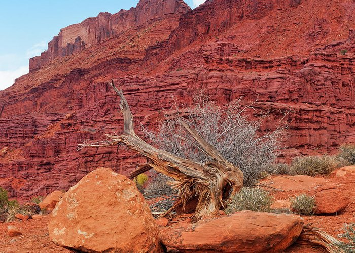 Cedar Tree Greeting Card featuring the photograph Cedar Wood Tree, Fisher Towers, Moab by Fotomonkee