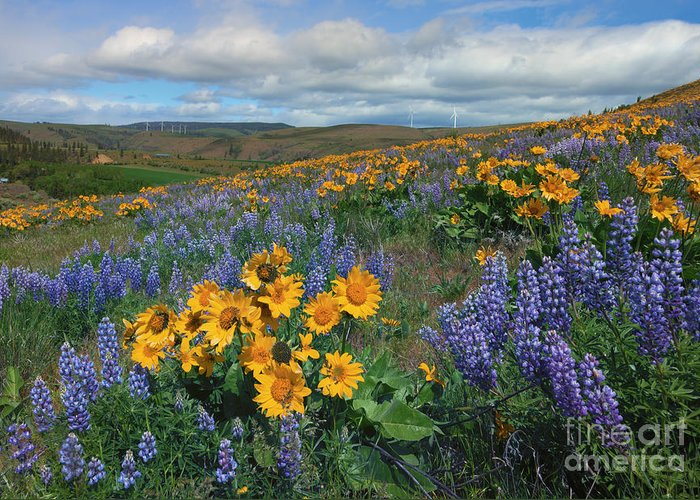 Kittitas Valley Greeting Cards