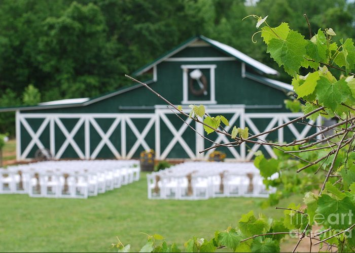 Wedding Greeting Card featuring the photograph Ceremony In The Vines by Gayle Melges