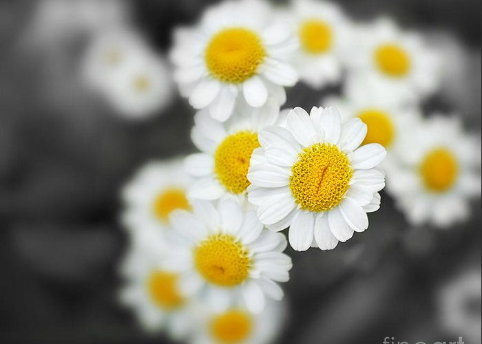 Closeup Greeting Card featuring the photograph Chamomile by Jane Rix