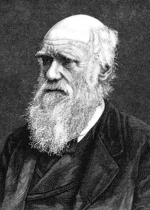 1885 Greeting Card featuring the photograph Charles Darwin by Collection Abecasis