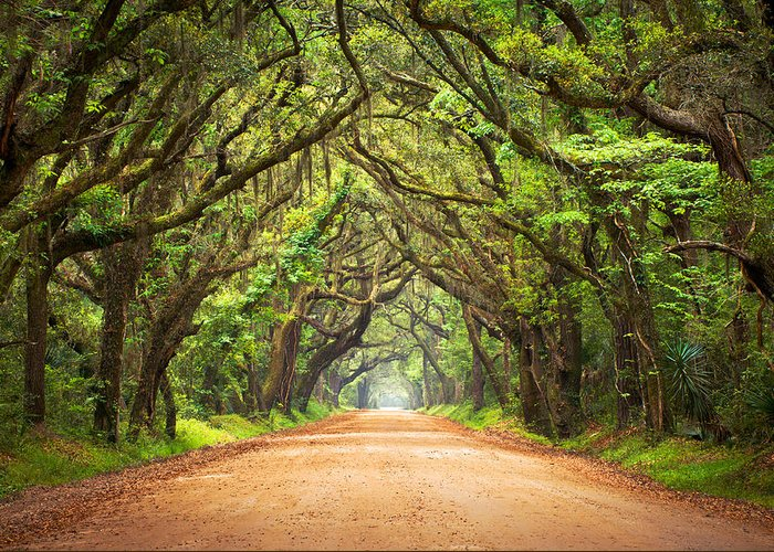 Swamp Greeting Card featuring the photograph Charleston SC Edisto Island - Botany Bay Road by Dave Allen