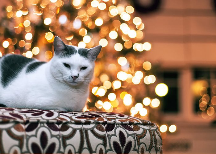 Pet Greeting Card featuring the photograph Charly And The Xmas Tree by Edward Kreis