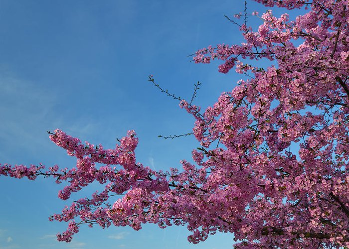 Architectural Greeting Card featuring the photograph Cherry Blossoms 2013 - 037 by Metro DC Photography