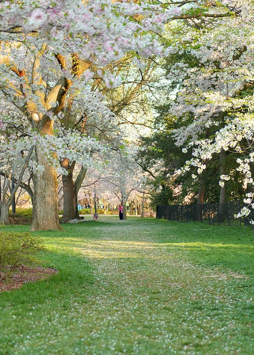 Architectural Greeting Card featuring the photograph Cherry Blossoms 2013 - 075 by Metro DC Photography