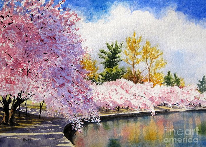 Cherry Trees Greeting Card featuring the painting Cherry Blossoms by Shirley Braithwaite Hunt