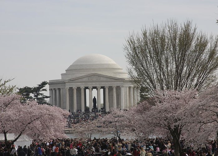 Cherry Greeting Card featuring the photograph Cherry Blossoms With Jefferson Memorial - Washington Dc - 01132 by DC Photographer