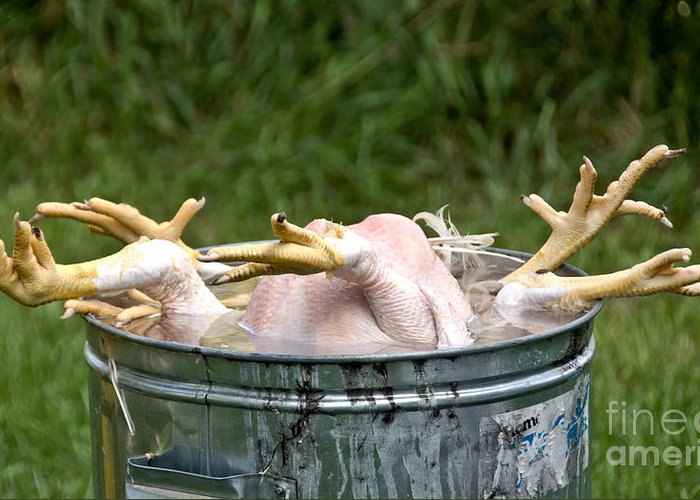 Chickens Greeting Card featuring the photograph Chicken Feet by Cheryl Baxter