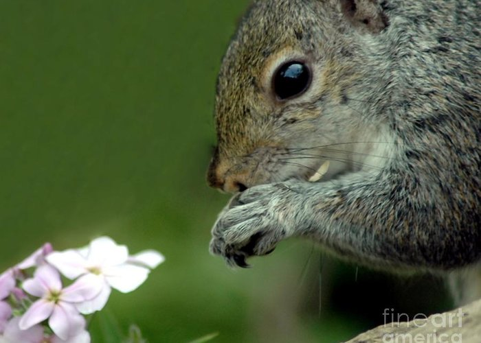 Chipmunk Greeting Card featuring the photograph Chipmunk by Kathleen Struckle