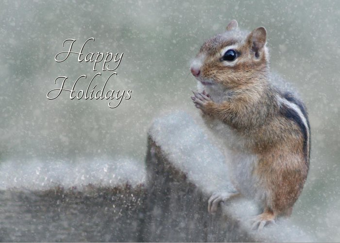 Chippy Greeting Card featuring the photograph Chippy Christmas Card by Lori Deiter