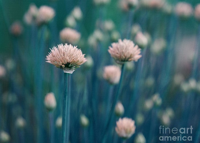 Kitchen Decor Greeting Card featuring the photograph Chive Blues by Irina Wardas