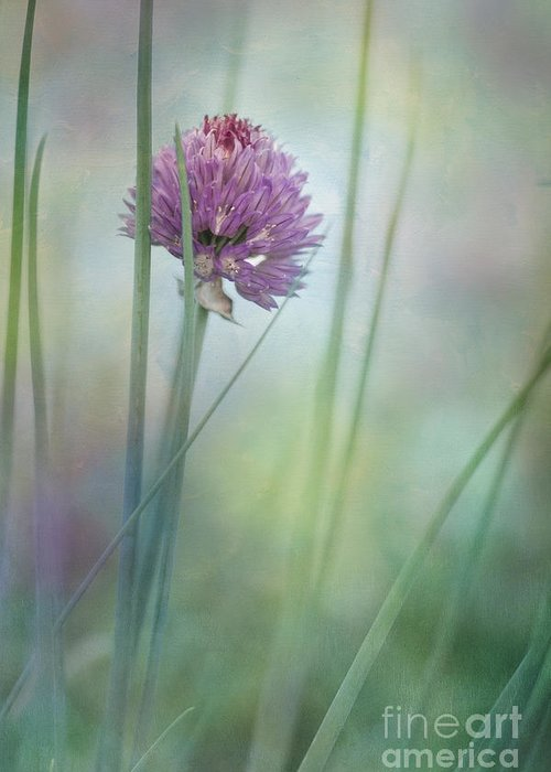 Chive Blossom Greeting Card featuring the photograph Chive Garden by Priska Wettstein