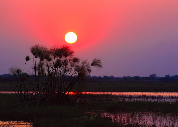 Chobe River Greeting Card featuring the photograph Chobe River Sunset by Amanda Stadther