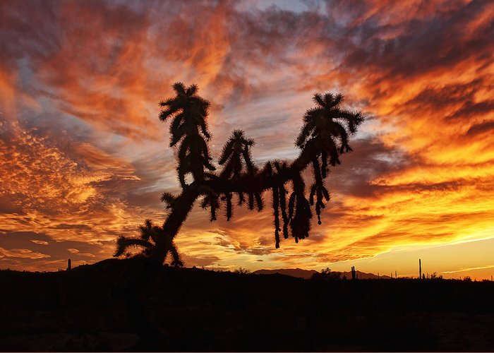 Arizona Greeting Card featuring the photograph Cholla In Flame by Ryan Seek