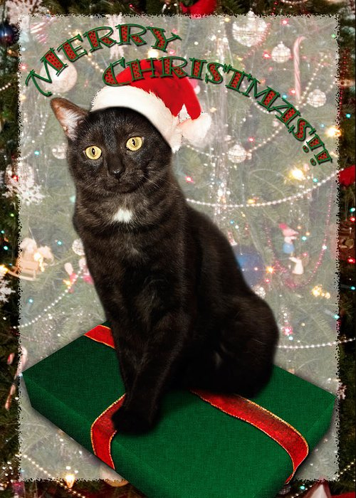 3scape Photos Greeting Card featuring the photograph Christmas Cat by Adam Romanowicz