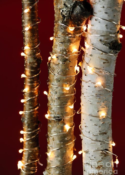 Christmas Greeting Card featuring the photograph Christmas Lights On Birch Branches by Elena Elisseeva