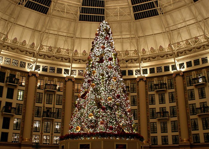 Christmas Greeting Card featuring the photograph Christmas Tree by Sandy Keeton