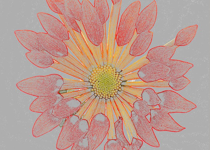 Chrysanthemum Greeting Card featuring the photograph Chrysanthemum As Coloured Pencil Drawing by Rosemary Calvert
