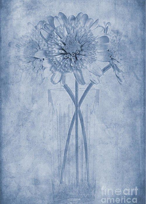 Close Focus Floral Digital Art Greeting Cards