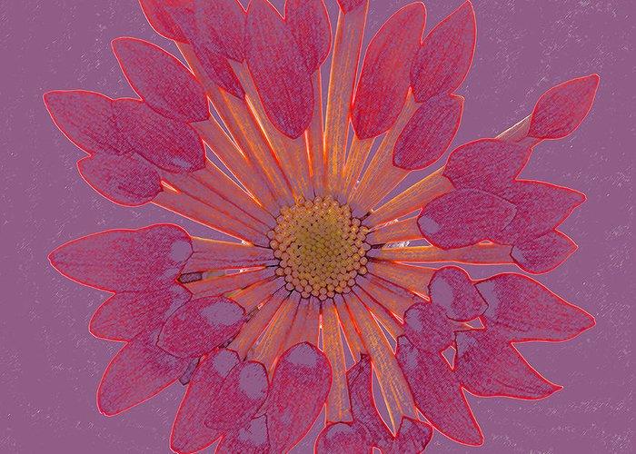 Chrysanthemum Greeting Card featuring the photograph Chrysanthemum Digitally Softly Toned by Rosemary Calvert