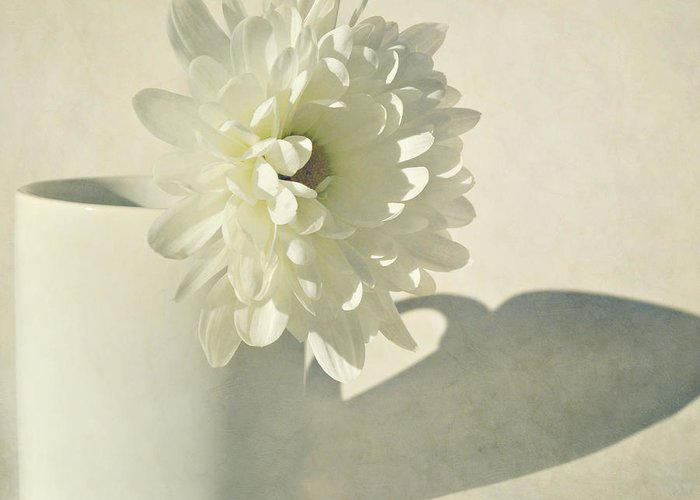 Flower Greeting Card featuring the photograph Chrysanthemum Shadow by Lyn Randle