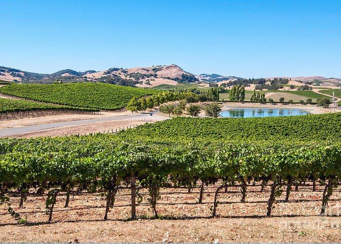 Napa Valley And Vineyards Greeting Cards